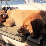 Sienna & Lucy Webb enjoy basking in the sun while sailing