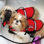 Too cute! Macchi & Cash sportin' their jackets!