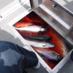 """a box full of fish"" as Al describes it"