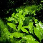 beautiful foliage along the trail at Stuart Island