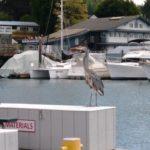the Blue Heron